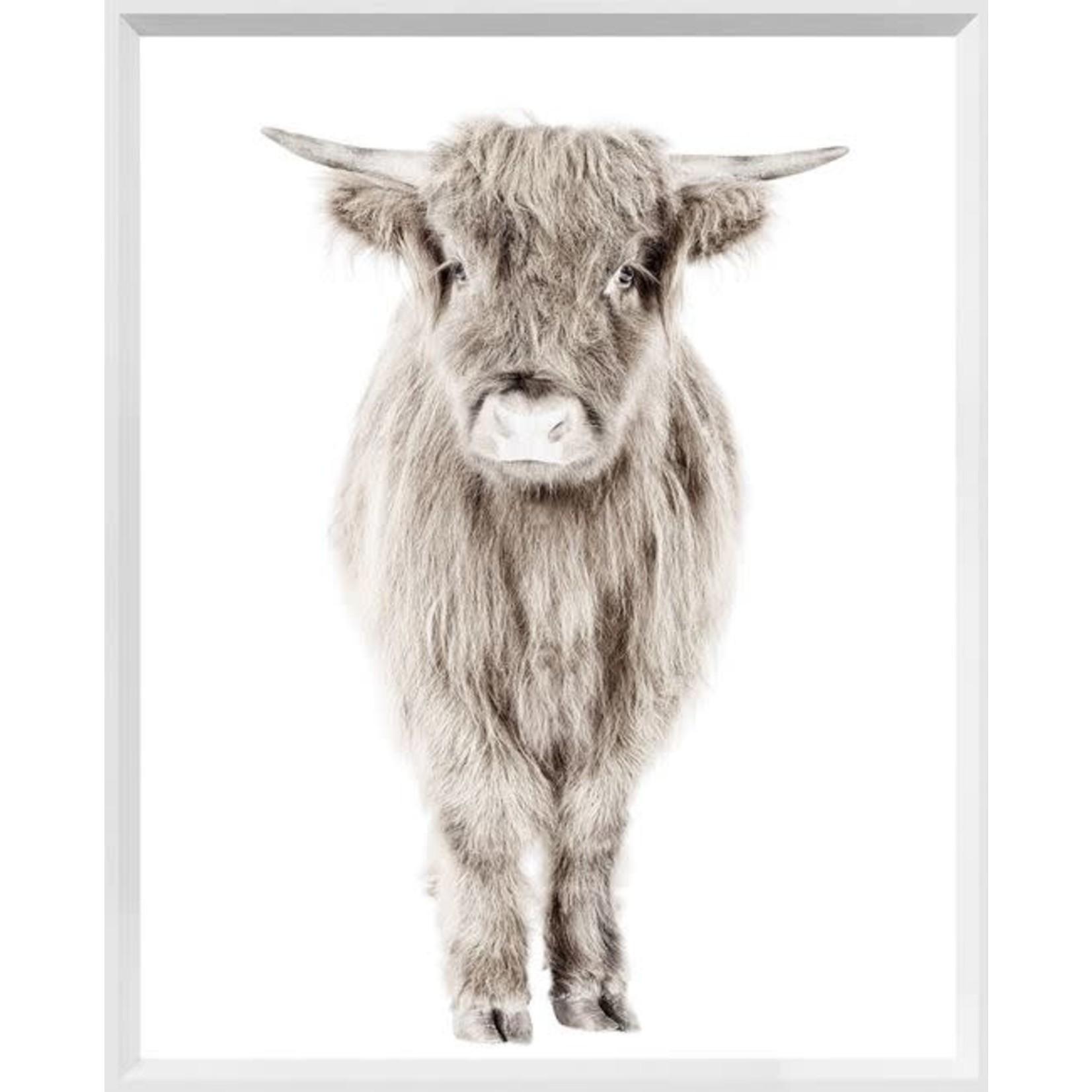 "Art - Highland Calf 32"" x 42"""
