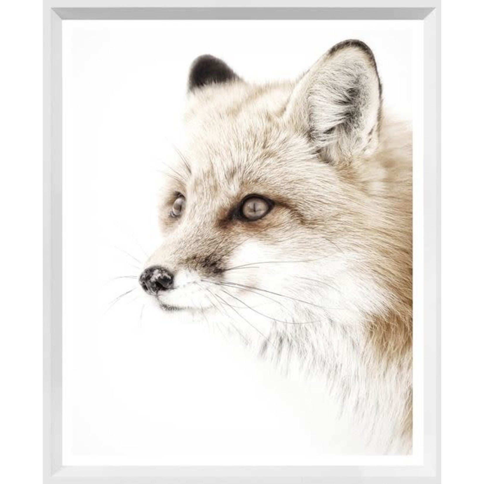 "Art - Red Fox 30"" x 37"""