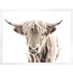 "Art - Highland Cow 33"" x 44"""