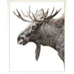 Art - Algonquin Moose