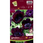 Anemone (bulb pkg) Meron Bordeaux (5 bulbs)