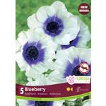 Anemone (bulb pkg) Rainbow Blueberry (5 bulbs)
