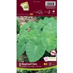 Colocasia (bulb pkg) Elephant Ears (10 bulbs)