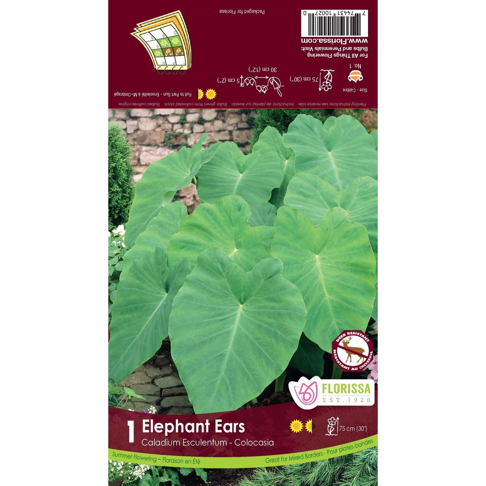 Colocasia (bulb pkg) Elephant Ears (10 bulbs)