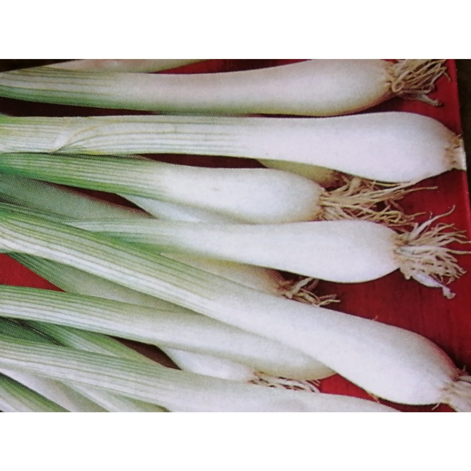Onions ORGANIC (seed pkg) - Evergreen Bunching