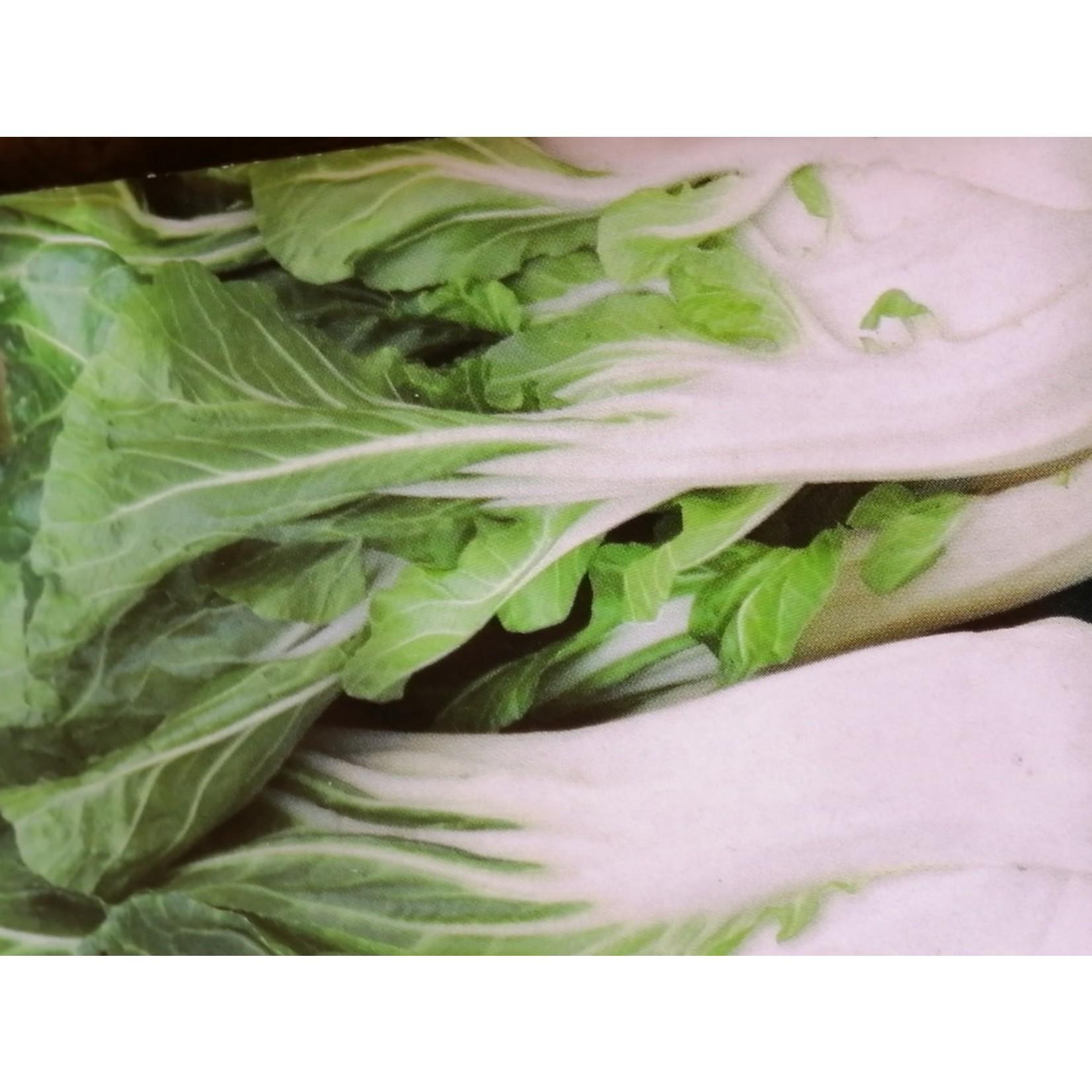 Cabbage ORGANIC (seed pkg) - Baby Pak Choi