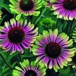 Perennials - 50% OFF
