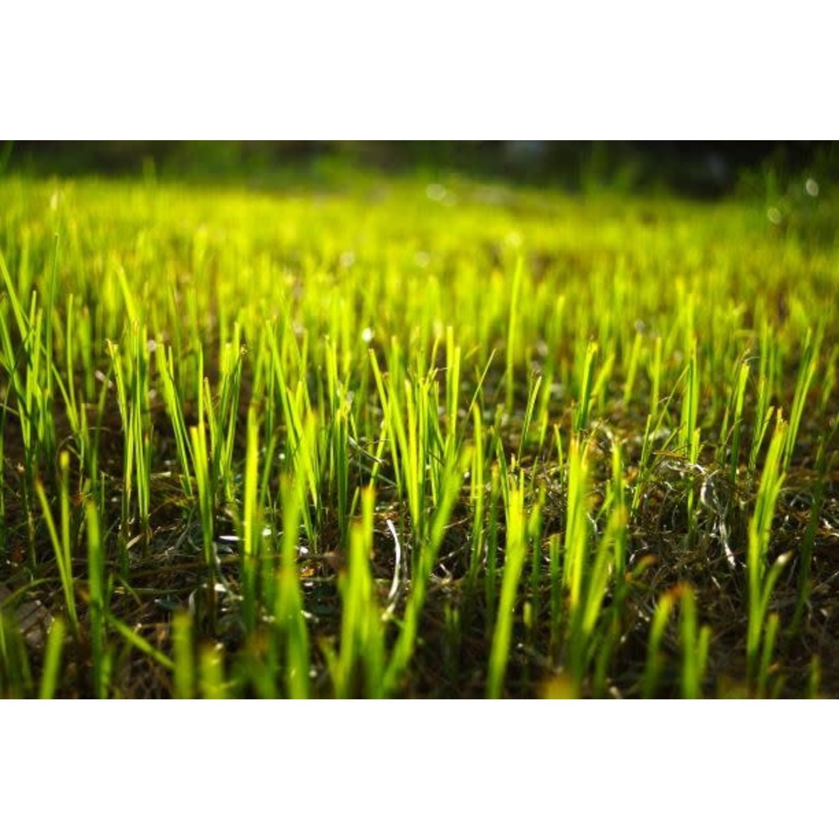 Grass Seed: Envirogreen 1000 Turf Mixture
