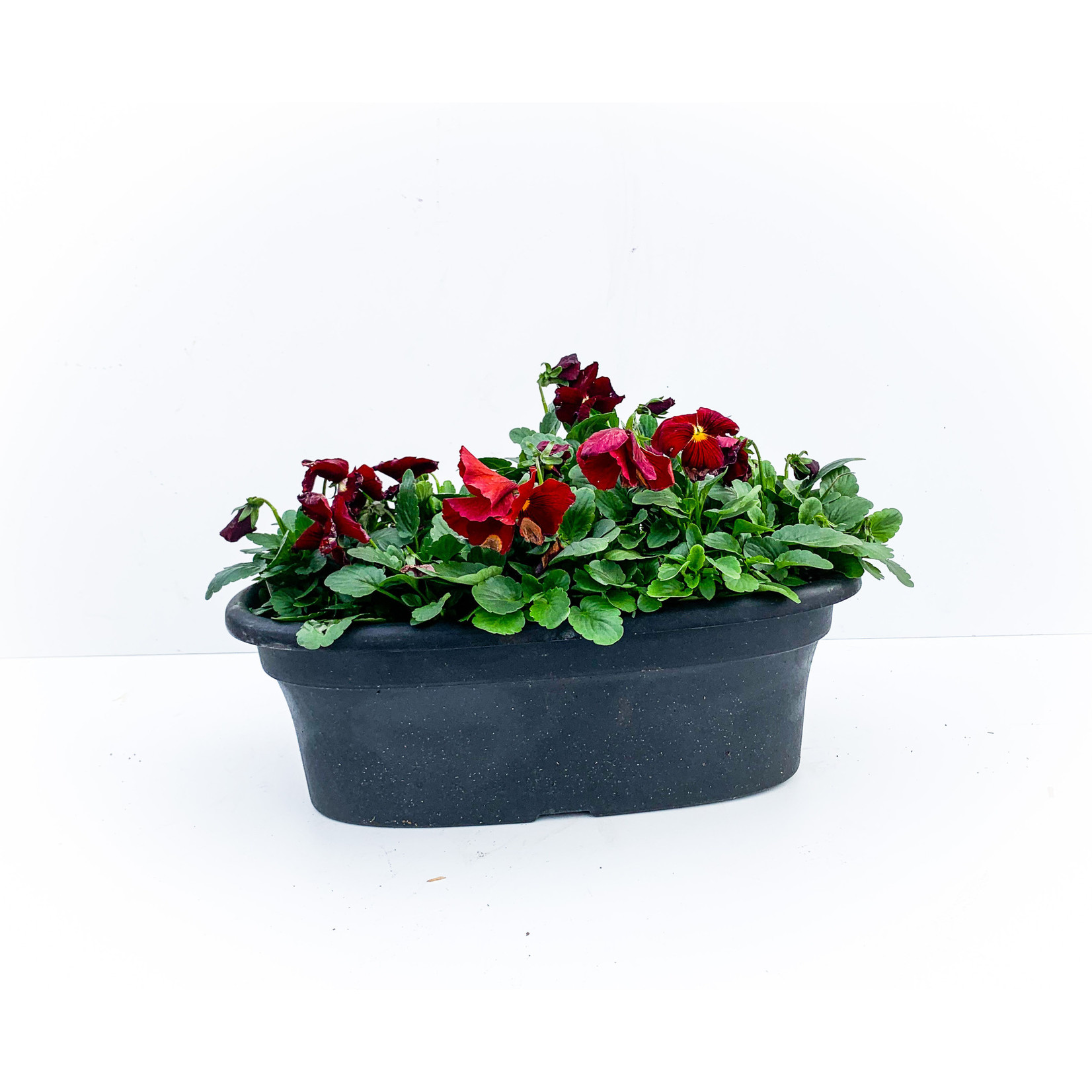"""Oval Planter - Pansy 16"""""""