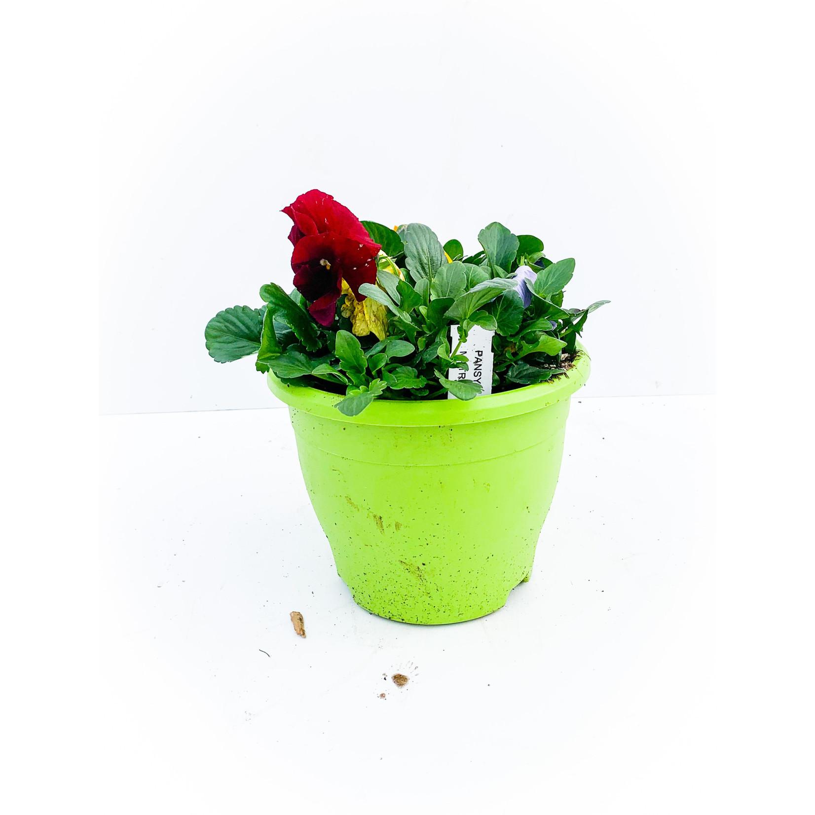 """Pansy/Viola 8"""" bowl"""