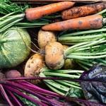 Vegetables - Potted 50% OFF