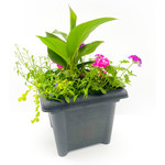 """Canna Lily Assorted Mix - 14"""" Square"""
