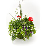 "Geranium Moss Pot HB - 16"""