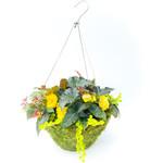 "Begonia Moss Pot - 16"""