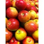 Apple 'McIntosh' - 7 gal potted