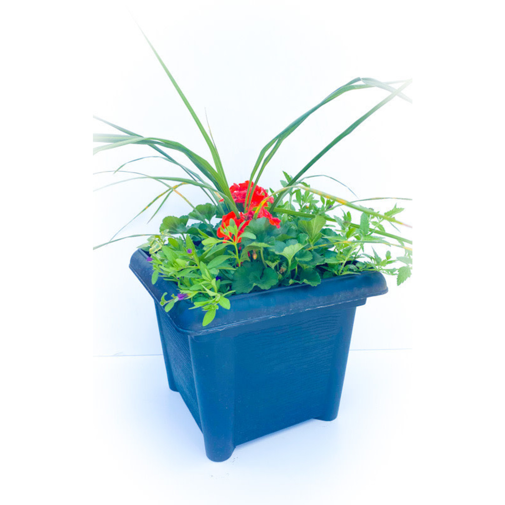 """14"""" Square Planter Mix with Spike Centre"""
