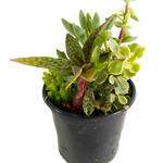 Succulents / Ferns / House Plants