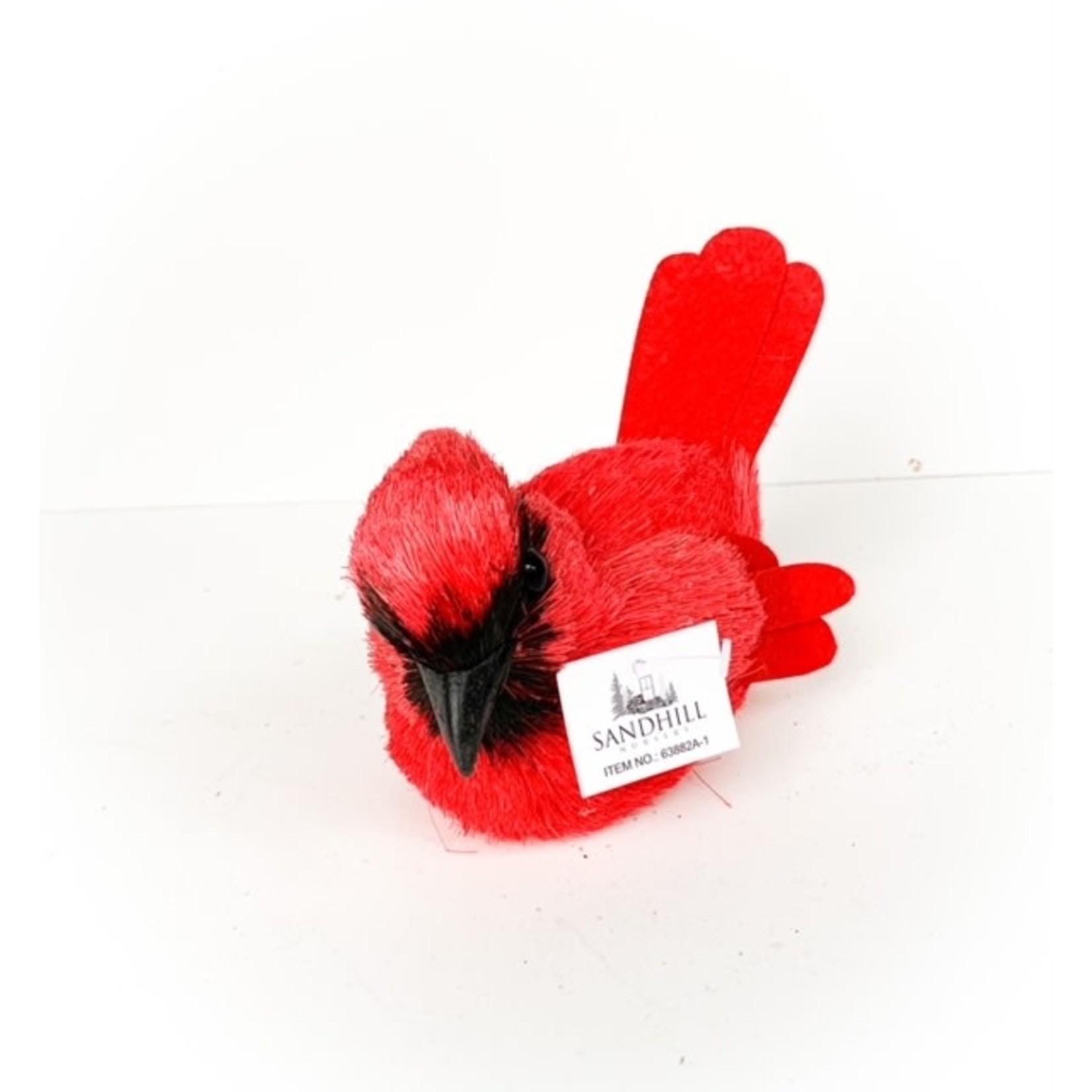 Cardinal Black Beak Small