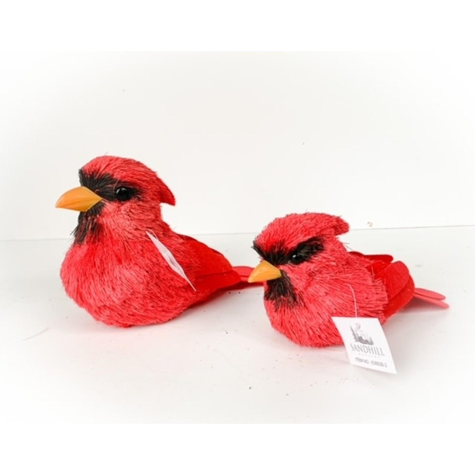 Cardinal Yellow Beak Small