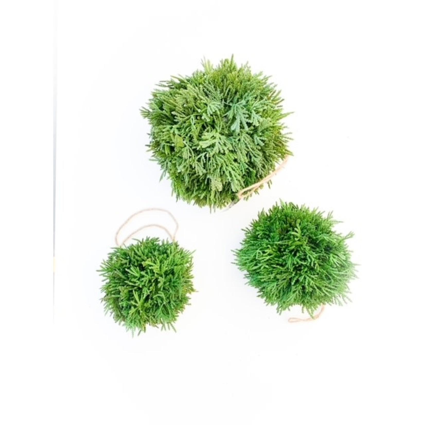 Green Cypress Ball