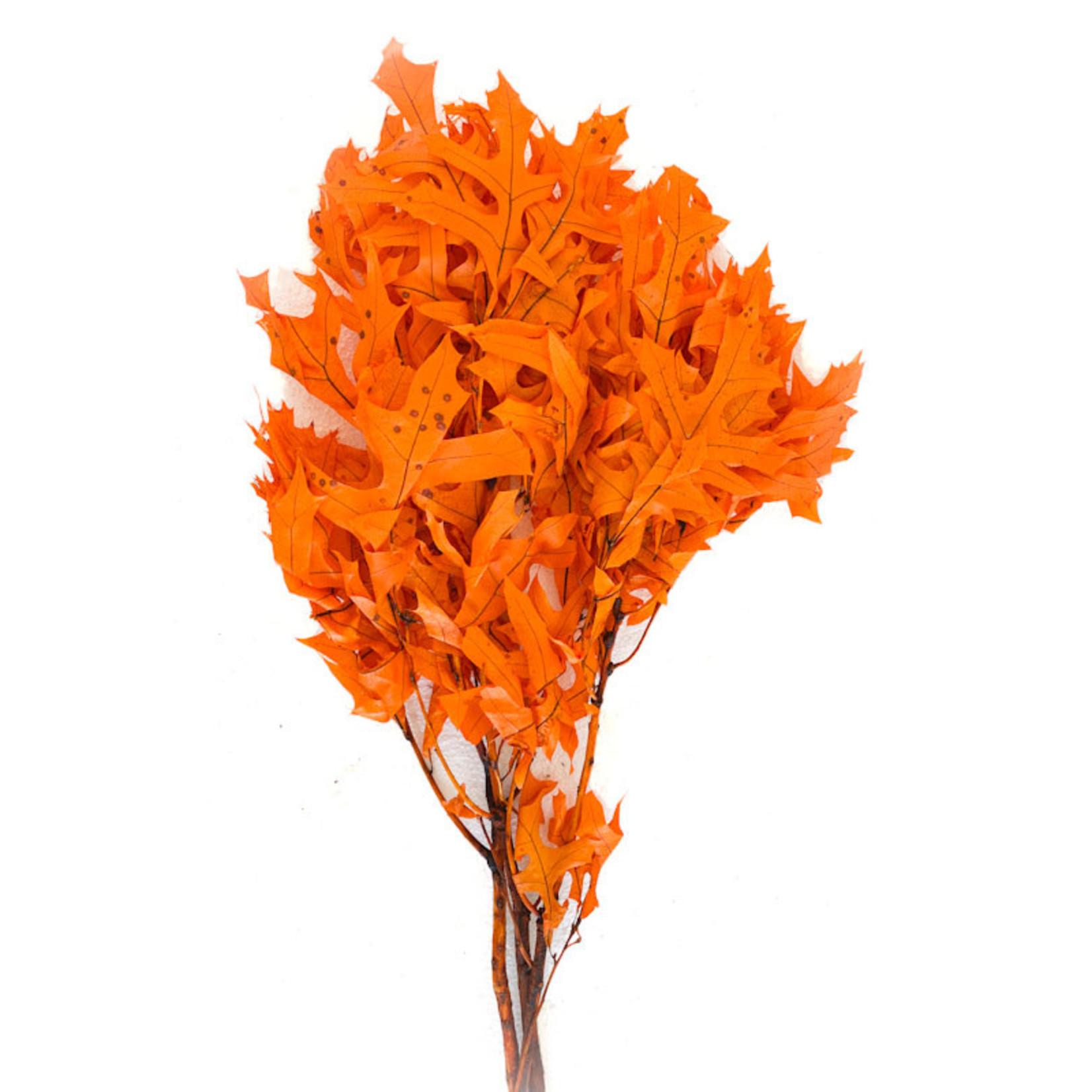 """Oak Leaves 'Orange' - 27"""" 3 stems/pkg"""
