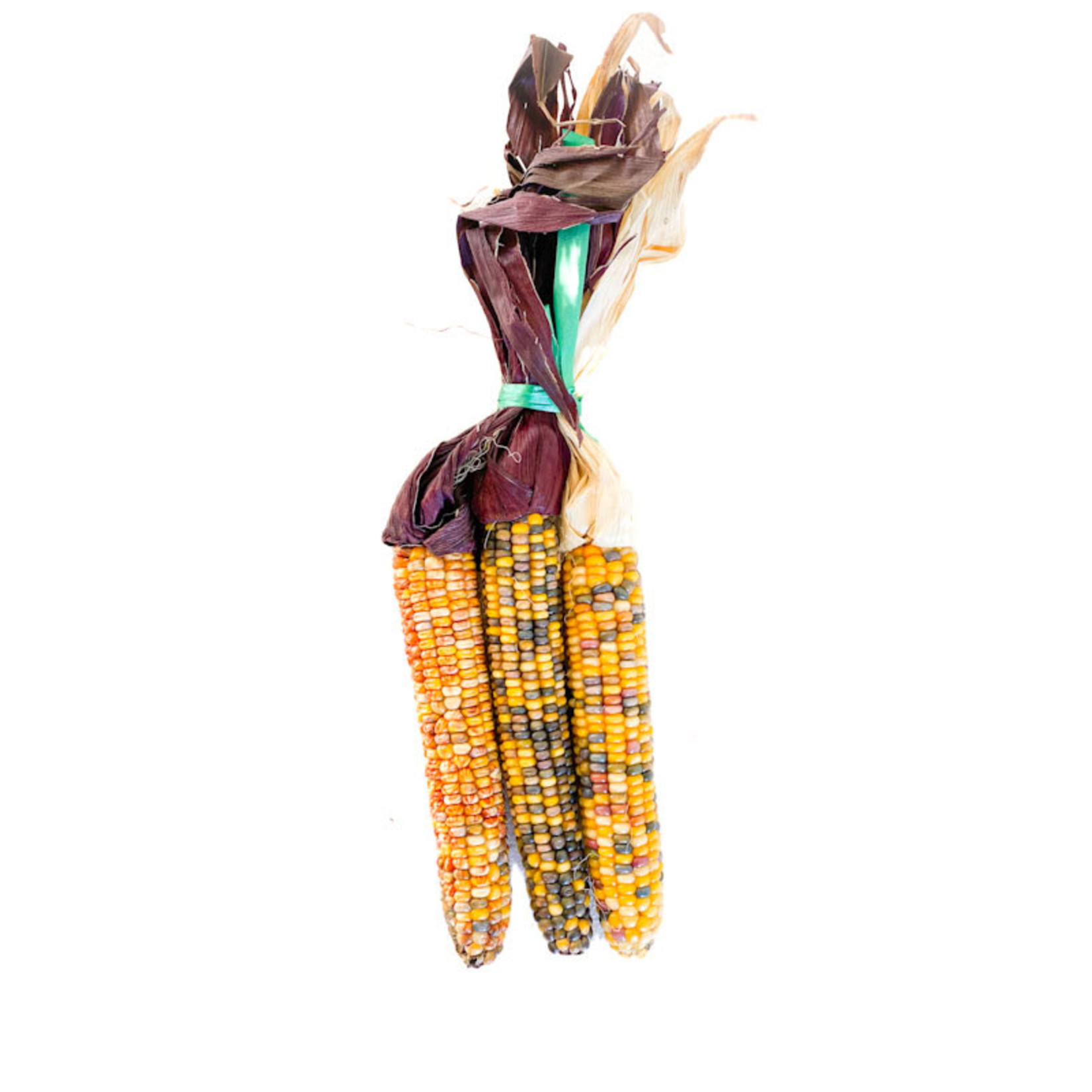 Harvest Corn Bundle
