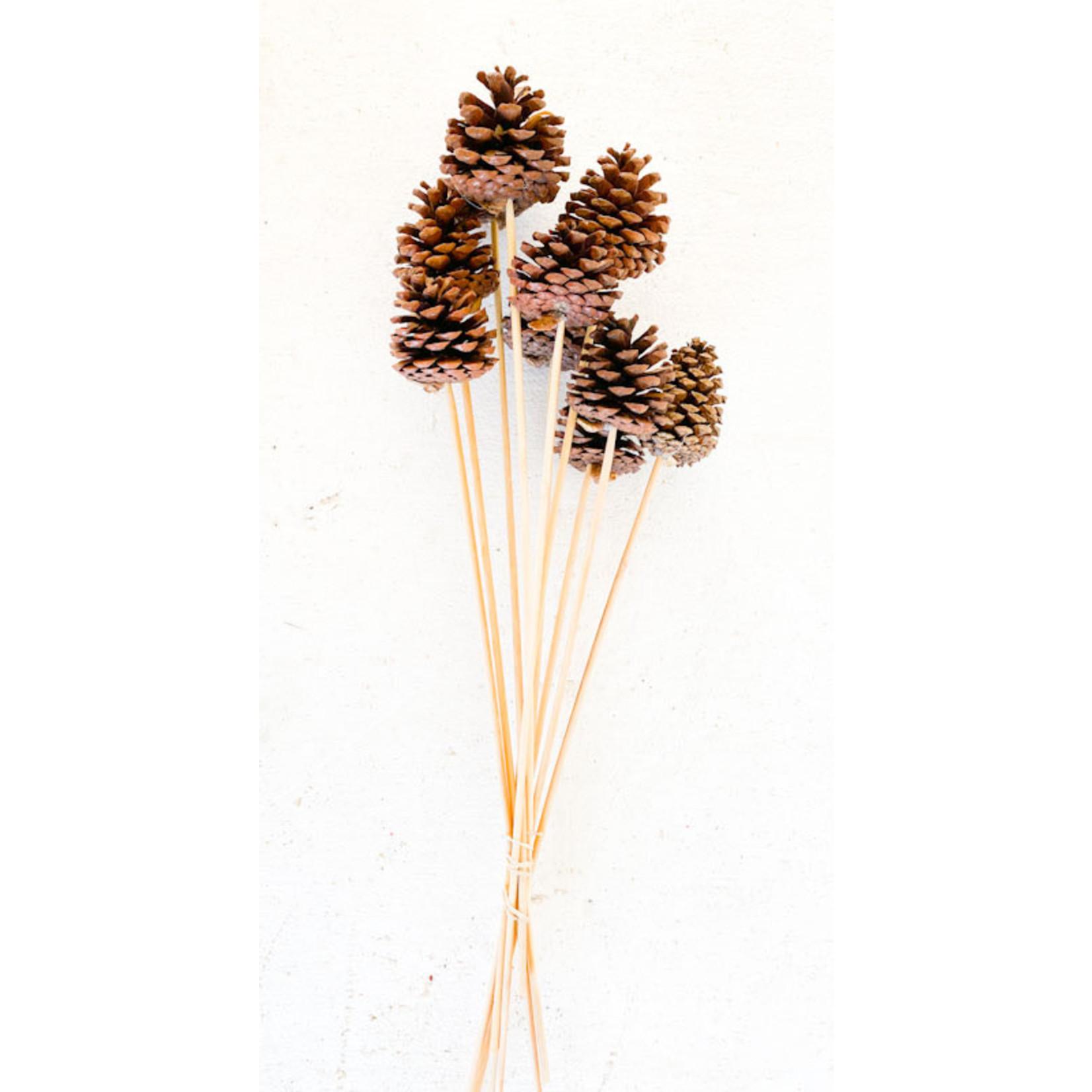 Pine Cones - Natural 10 Stem