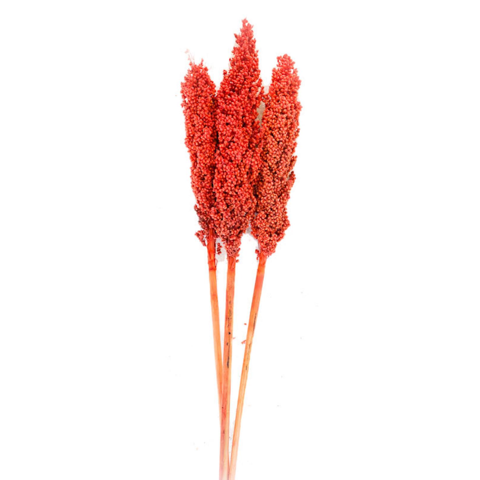 Milo Berry - Orange (3-4 stem)