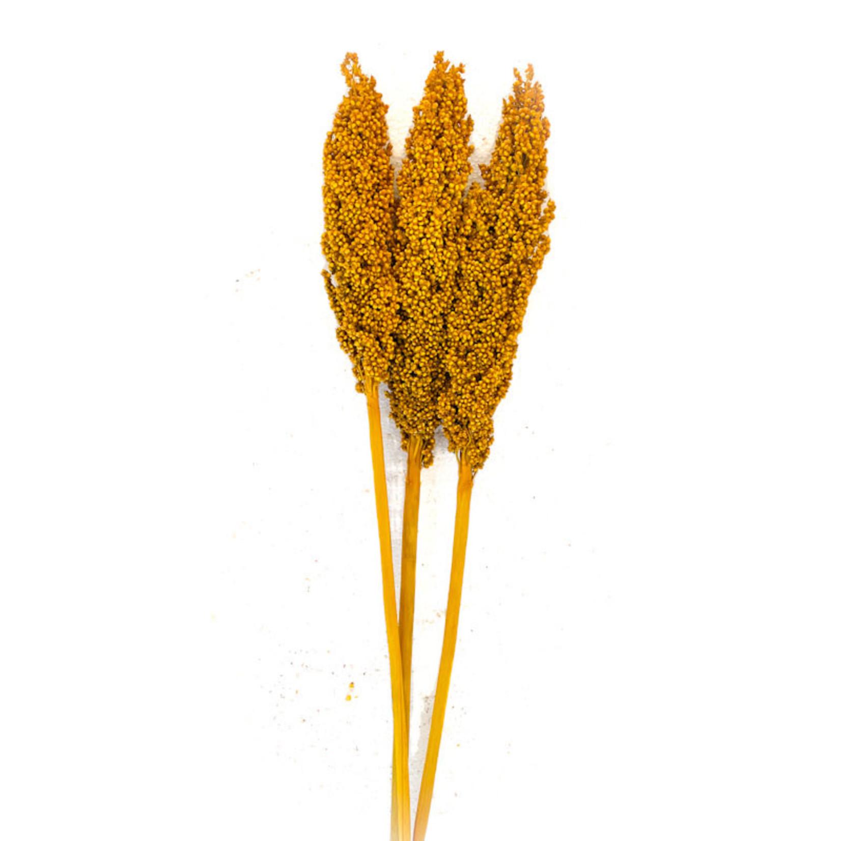 Milo Berry - Yellow (3-4 stem)