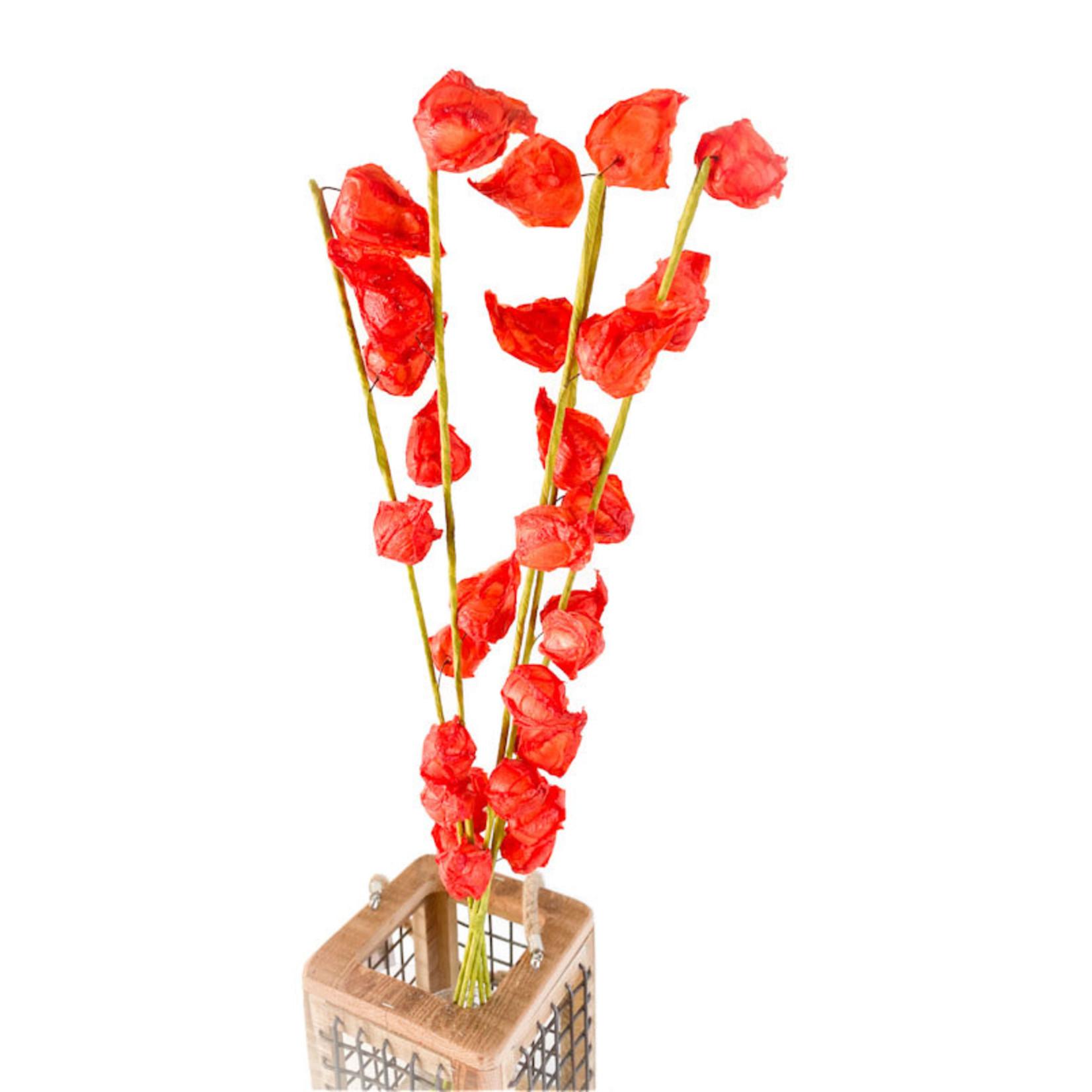 Chinese Lanterns - 5 stem - Orange
