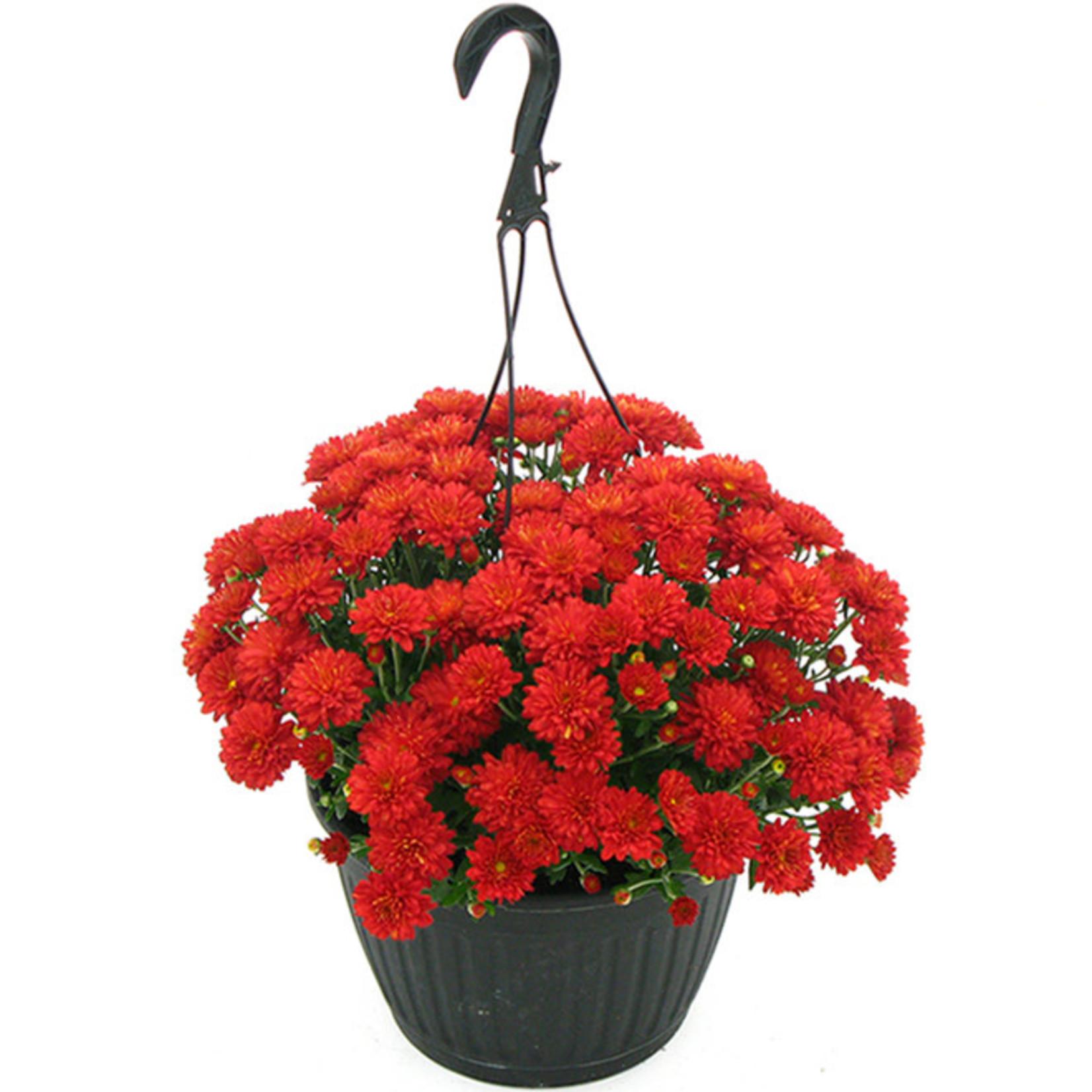 "Fall Mum Hanging Fibre Basket 12"""