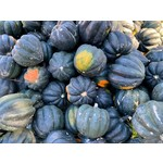 Fall Squash: Pepper/Acorn