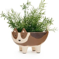 Planter Dog Brown