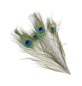 HOOK AND HACKLE Peacock Eyes - 8-15""