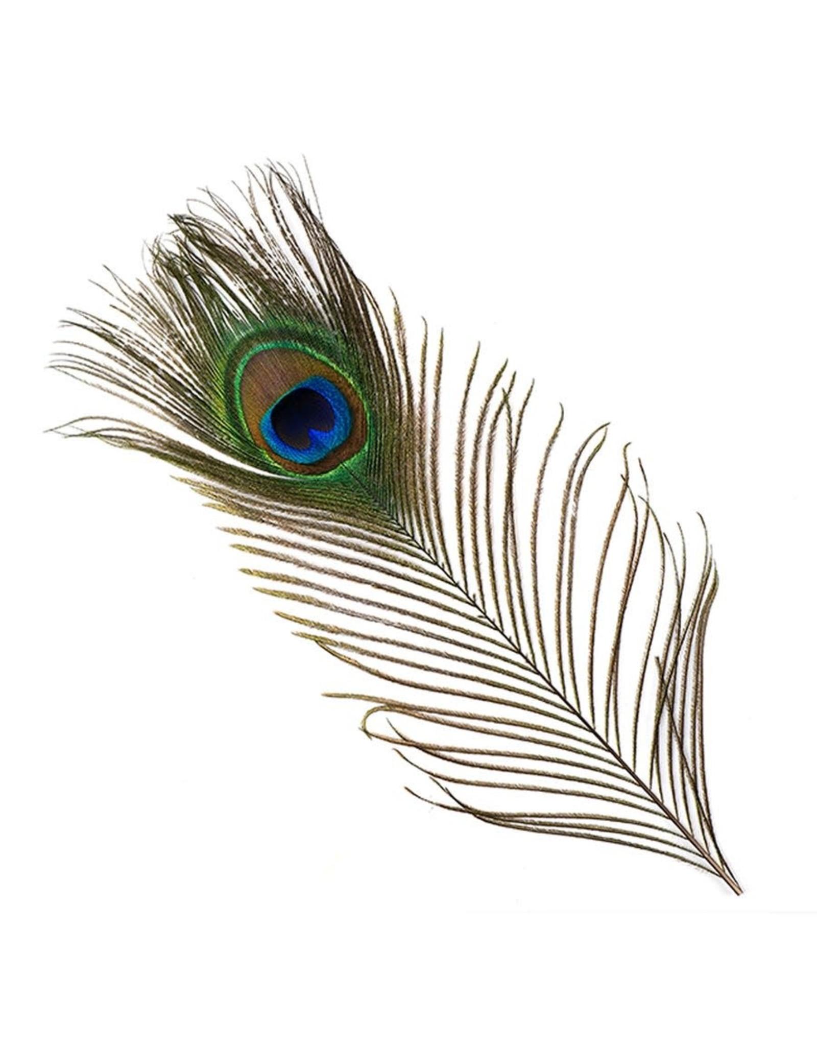 """HOOK AND HACKLE Peacock Eyes - 8-15"""""""