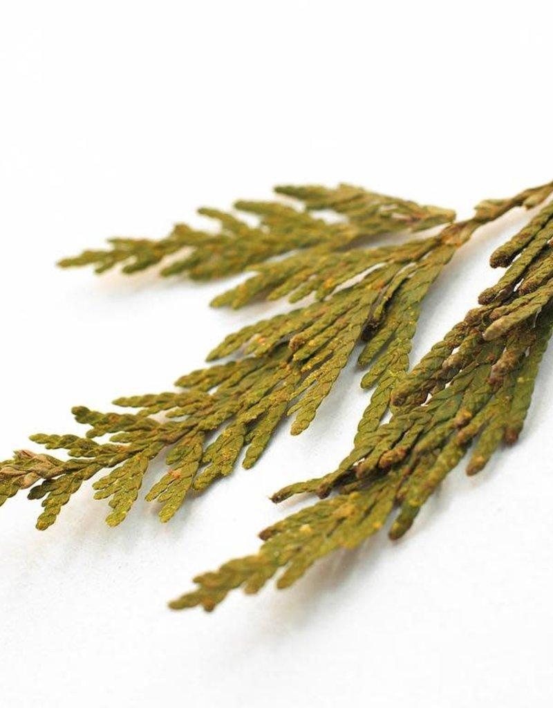 Golden Poppy Herbs Cedar Tips, Western Red bulk/oz