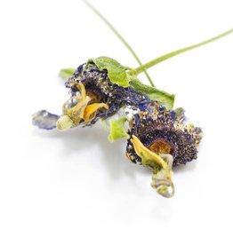 Golden Poppy Herbs Passionflower, LOCAL, Organic, bulk/oz