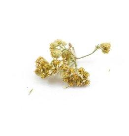 Golden Poppy Herbs Yarrow Flowers, LOCAL, Organic, bulk/oz