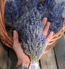 Golden Poppy Herbs Lavender Bundle, Organic - Wildcat Farms