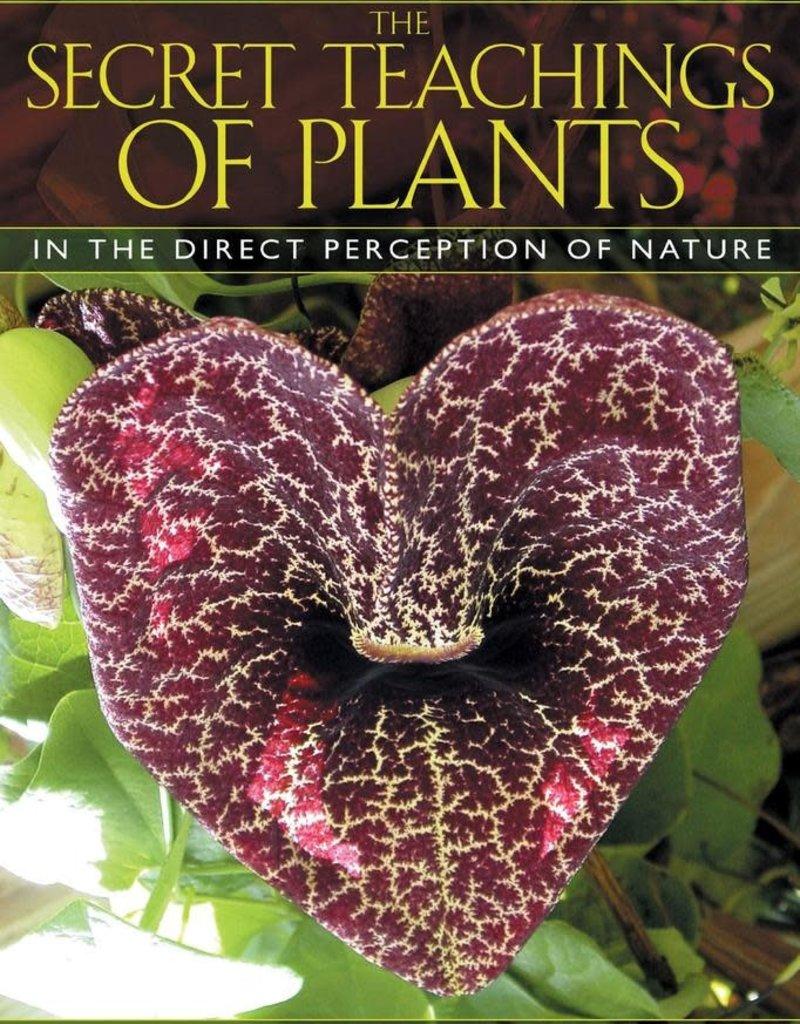 Golden Poppy Herbs Secret Teachings of Plants - Stephen Buhner