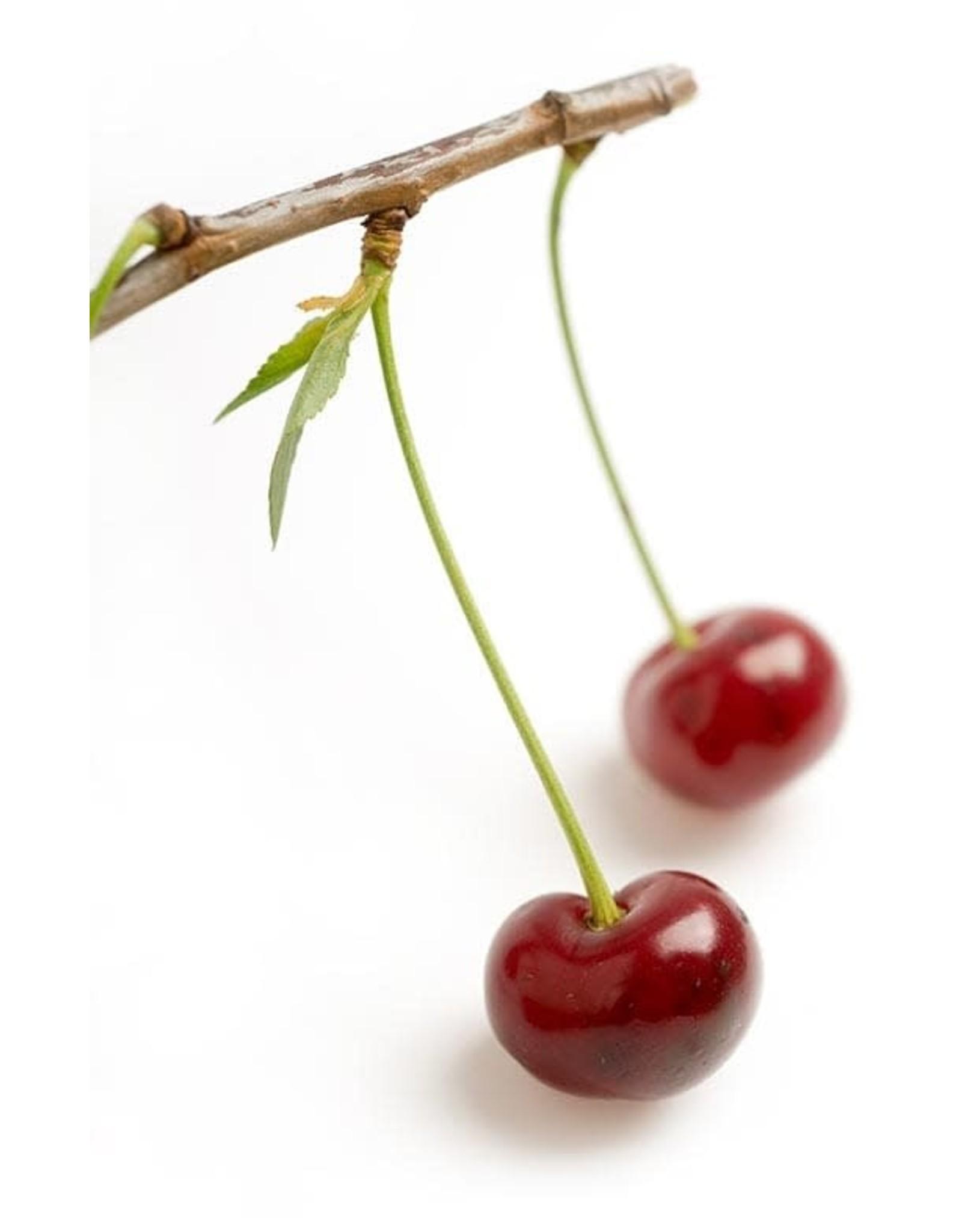 Luxardo Luxardo Original Marachino Cherries