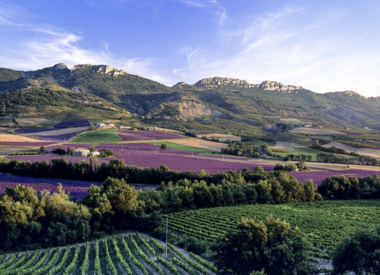 Provence, Languedoc, South of France