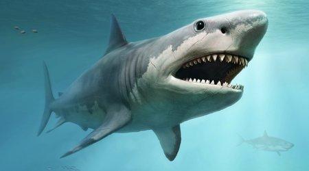 How Dangerous Men control Women #4 - Why bars are full of Loan Sharks