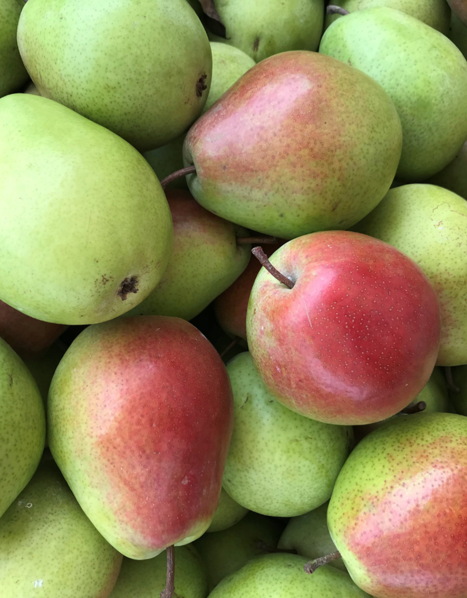 Campbell's Orchards Pears