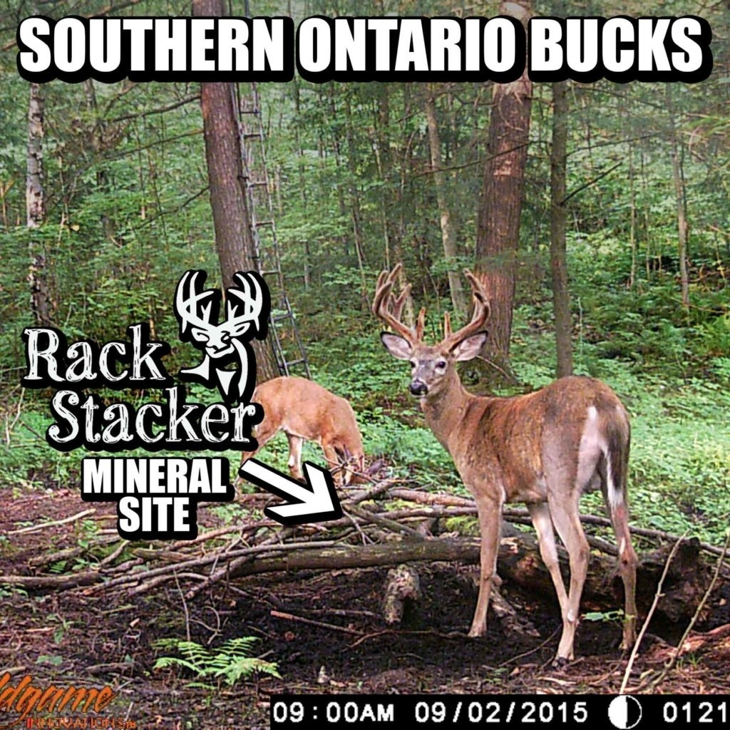 Whitetail Deer Mineral Sites