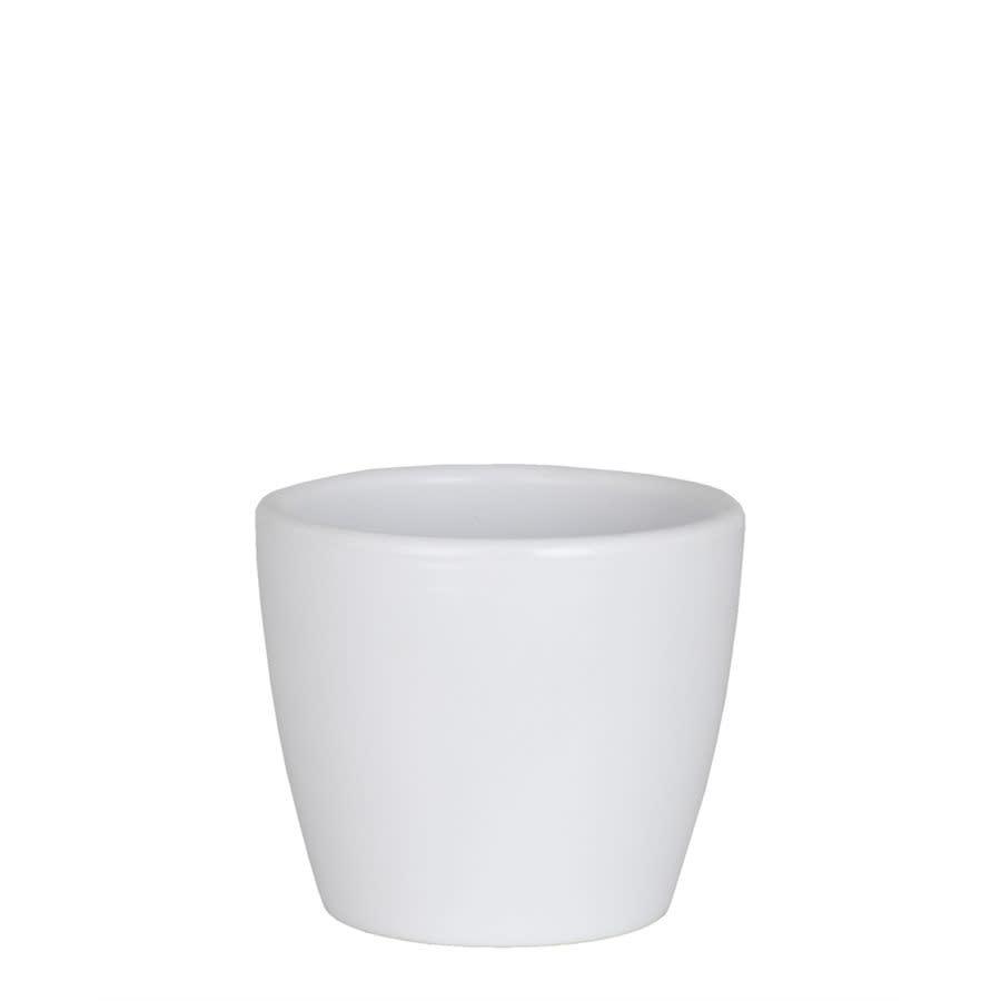 Nubia Cactus Blanc (Pot)-1