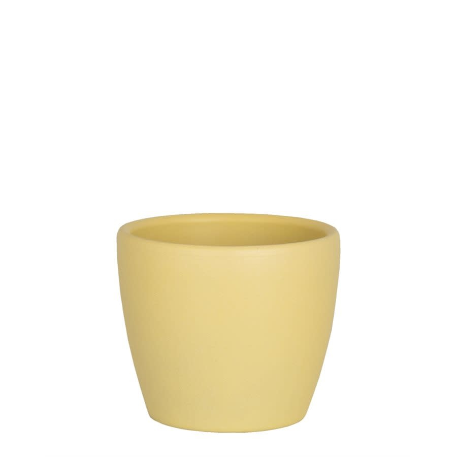Nubia Cactus Jaune (Pot)-1