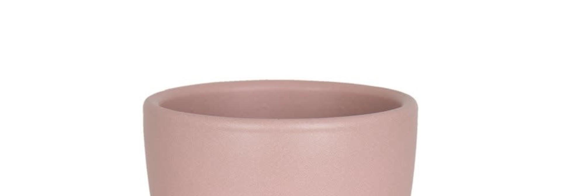 Nubia Cactus rose pâle (Pot)