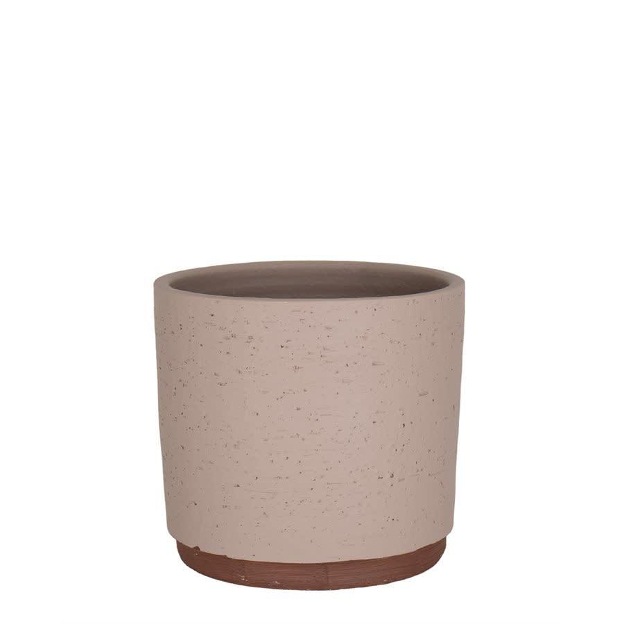 Néria rose (pot)-1