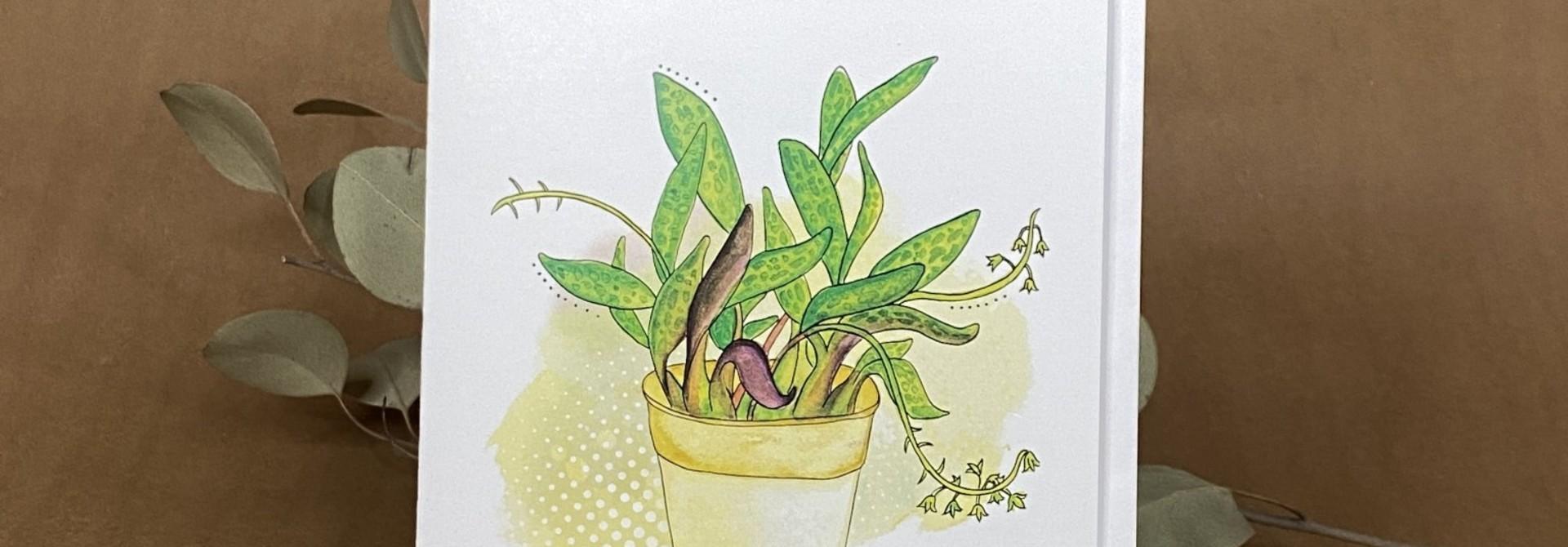 Pot plante - Carte